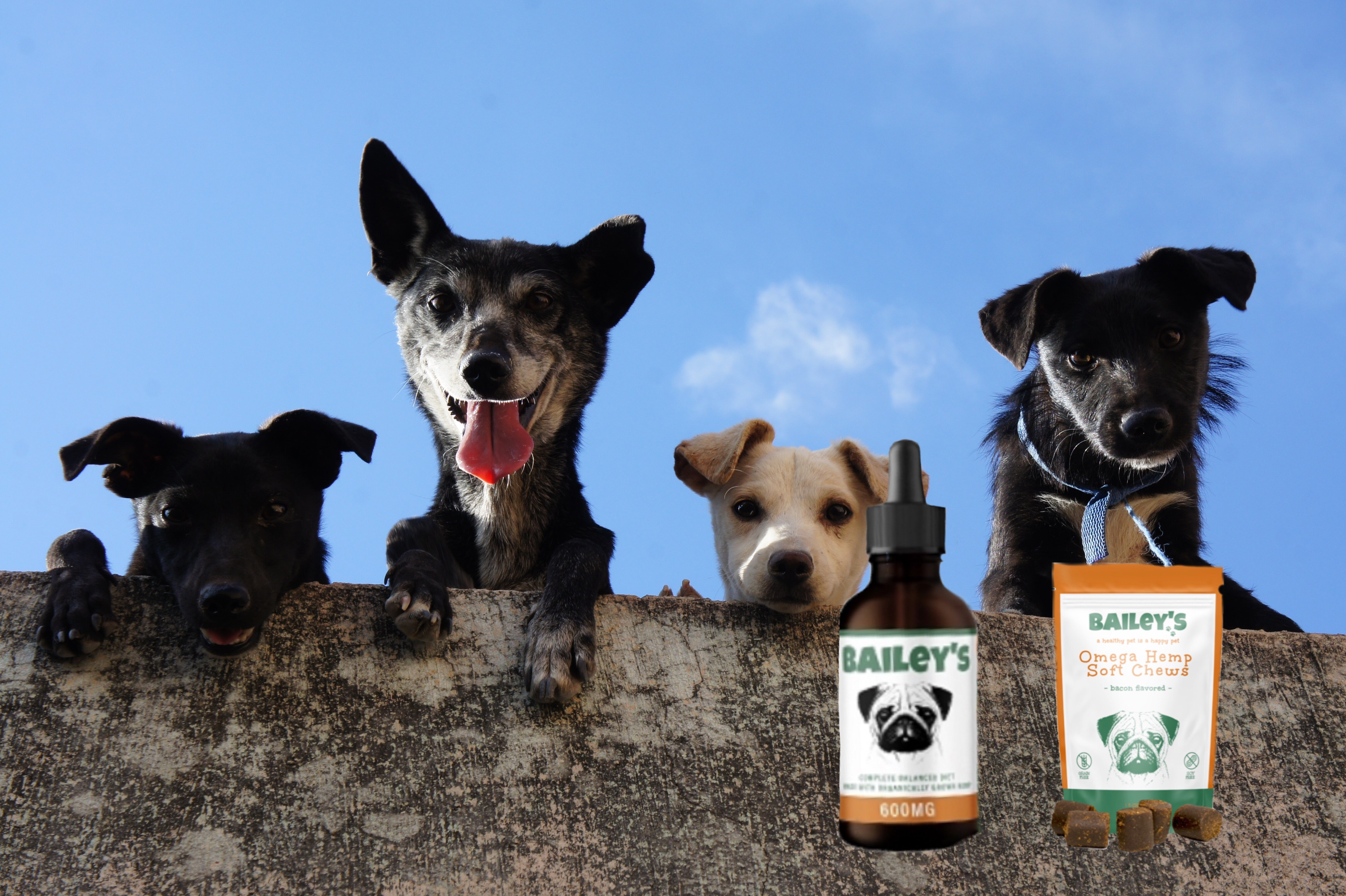 Why CBD for Pets Is One of the Latest Health Trends